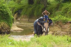 Riding An Elephant Royalty Free Stock Photography