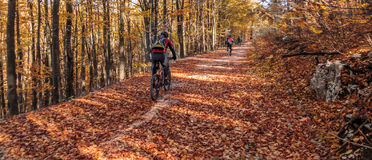 Riding bicycle through country roads in autumn Royalty Free Stock Photography
