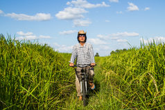 Riding bicycle in the rice field Royalty Free Stock Photos