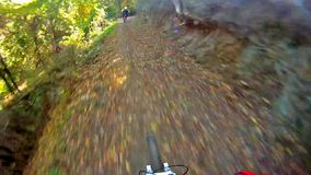 Riding a bike on single track in the forest Royalty Free Stock Photography