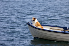 Riding a Boat. Dog in the front of a small boat Stock Photography