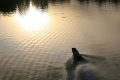 Riding boat with wave and light reflection Stock Photos