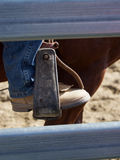 Riding boot and Stirrup Royalty Free Stock Photography