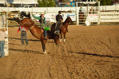 Riding a bucking horse. This is a horseback rider riding a brown horse thats bucking at the rodeo Royalty Free Stock Photography