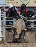 Riding Bull. Bull riding cowboy at the Cottonwood Rodeo in California Royalty Free Stock Images