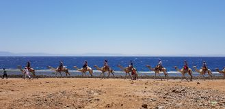 The beauty of the red sea egypt stock image