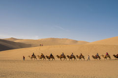 Riding camel Stock Images