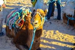 Riding a camel Royalty Free Stock Photos