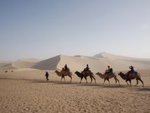 Riding a Camel in A Part of Silk Road in Dunhuang Desert. Travel. In Dunhuang City, Gansu, China. in 2013, October 14th royalty free stock image