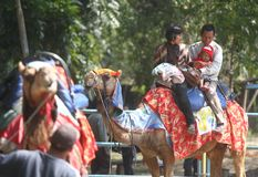 Riding camel Royalty Free Stock Photo
