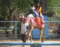Riding camel Stock Photos