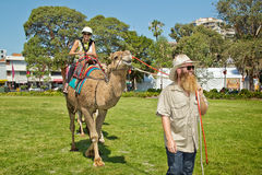 Riding a camel in Sydney Stock Photo