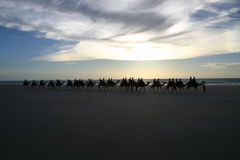 Riding camels. People crossing a sandy beach on camels. Australia Stock Images