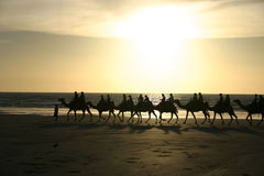 Riding camels. On a sandy beach at sunset. Australia Royalty Free Stock Photography