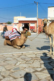 Riding camels in El Jem Stock Images