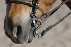 Riding with curb. Horse-mouth with potugesian s-curb Stock Photos