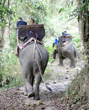 Riding an elephant in Thailand view from the back Stock Photo