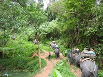 Elephant Safari in the picturesque Dao Pak Park in Thailand royalty free stock image