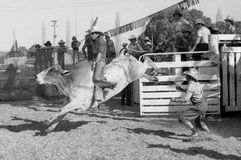 Riding fast. Unidentified contestant rides a bull during a small town rodeo, circa 1980 in Kingaroy, Australia Royalty Free Stock Image