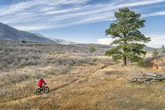 Riding a fat bike in Colorado foothills. Male riding a fat bike on single track trail in Colorado foothills, fall scenery royalty free stock photography
