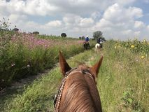 A View from Horseback. Riding through a field in rural Mexico Royalty Free Stock Photo
