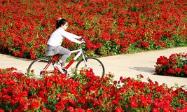 Riding through flowers Royalty Free Stock Photography