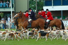 Riding with fox hounds Stock Images
