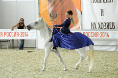 Riding hall International Horse Show. Woman jockey in blue dress Female rider on a white horse. Stock Images