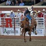 Riding high. royalty free stock photos