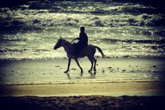 Riding the horse along the sea. Man taking his horse on a walk stock photo