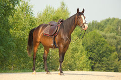Riding horse in Stock Images