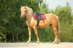 Riding horse in Royalty Free Stock Photo
