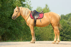 Riding horse in Stock Photography