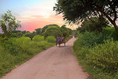 Riding horse cart on dusty road in Bagan in Myanmar at sunset Royalty Free Stock Photo