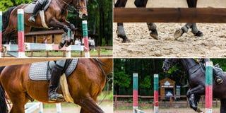 Riding a horse closeup stock image