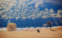 Riding a horse in colorful autumn Stock Images
