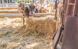 riding horse equipment Stock Photos