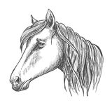 Riding horse head sketch for equine sport design Stock Images