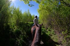 Horse riding in Glenorchy, New Zealand stock photography