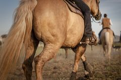 Riding a horse Stock Photography