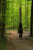 Riding horse through the woods Stock Image