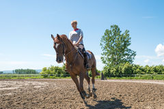Riding horse Stock Image