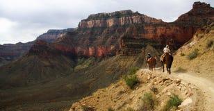 riding horseback каньона грандиозный Стоковое Изображение RF