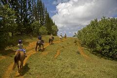 Riding horseback. Horseback riders on a trail stock photos