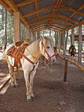 Riding Horses. Horse saddled and ready to ride in a park in Chiapas, Mexico royalty free stock photo