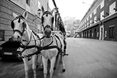 Riding horses in city center of Salzburg, Austria Stock Photography