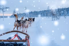 Riding husky sledge in Lapland landscape.  Stock Images