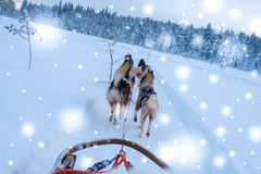 Riding husky sledge in Lapland landscape.  Stock Image