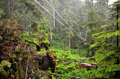 Riding the Ketchikan Zipline Royalty Free Stock Photography