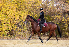 Riding lessons in the park in autumn Royalty Free Stock Image